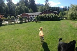 pet care and boarding in whistler canada